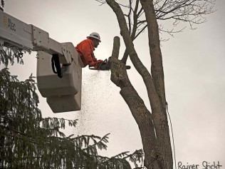 Tree Trimming/Tree Pruning